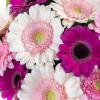 Букет цветов - Гербера Букеты цветов