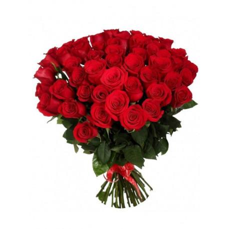 51 красная роза Розы