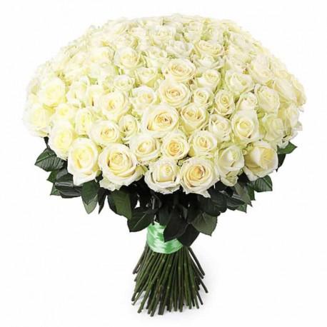 101 белая роза Розы