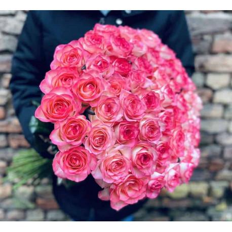 51 розовая роза Розы