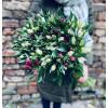 Букет цветов - Альстромерия Букеты цветов