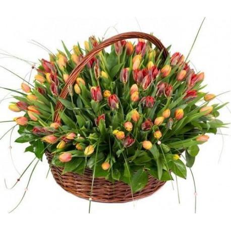 Ziedu grozs - Tulpes Ziedu grozi