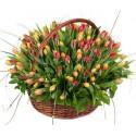 Flower Basket - Tulips