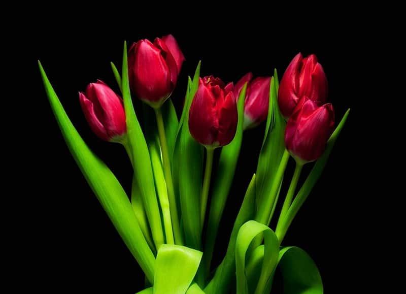Tulpes 8.martā