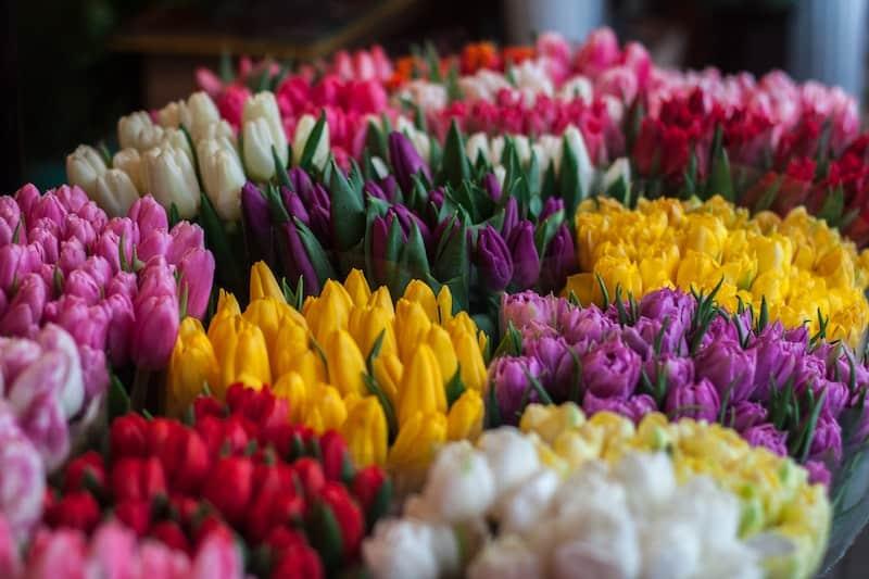 Kādus ziedus nedāvināt